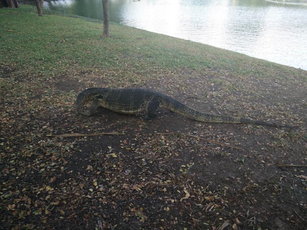 Chillin' lizard at the Lumpini Park.