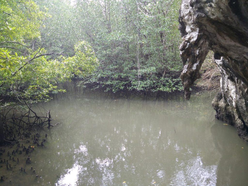 Langkawi's mangroves.