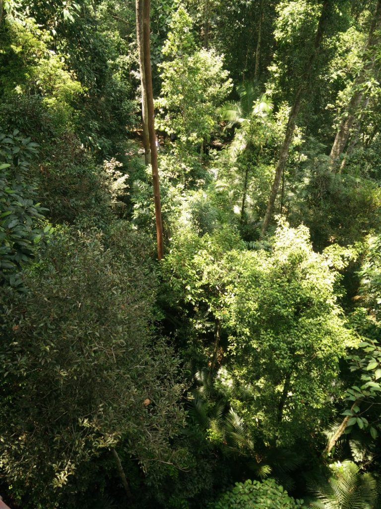 The view from the top of the canopy walkway.