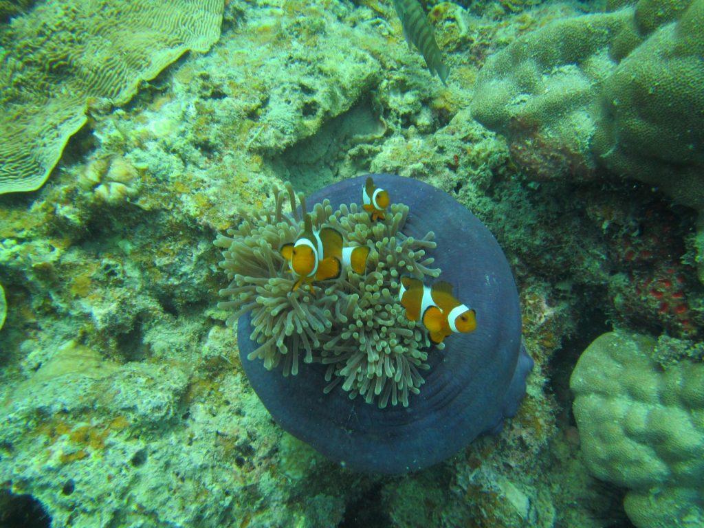 Nemo :P