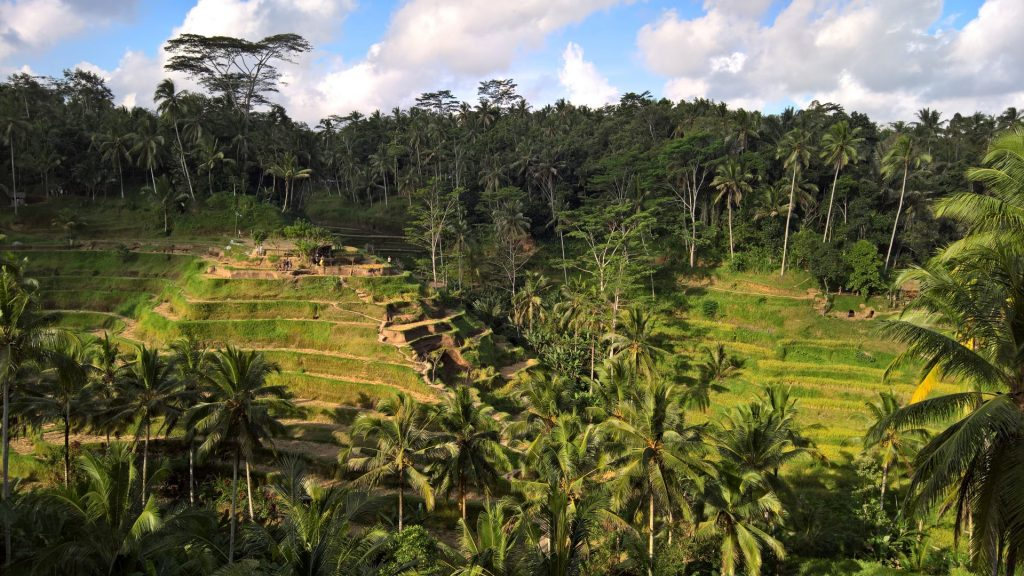 Rice terraces near Ubud.