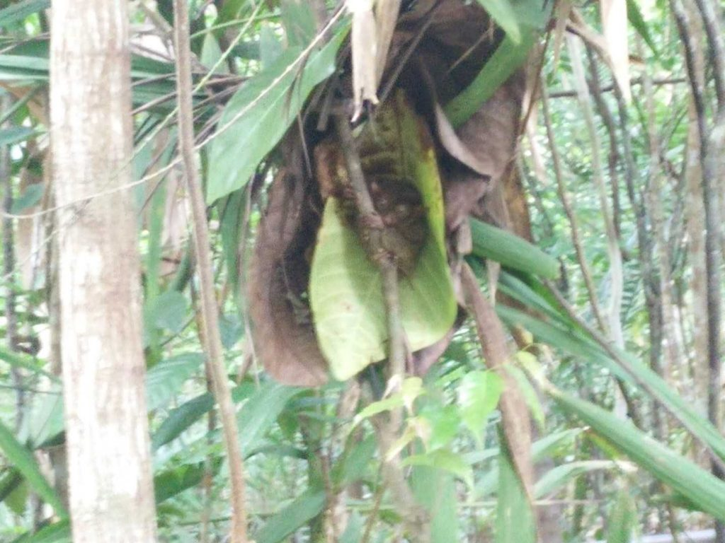 My blurry attempt to take a picture of a tarsier