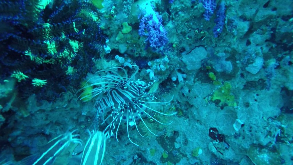 Picture of a lionfish during the day with natural light