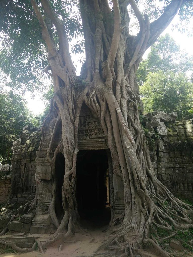 I love how these trees grow around and through the temples.